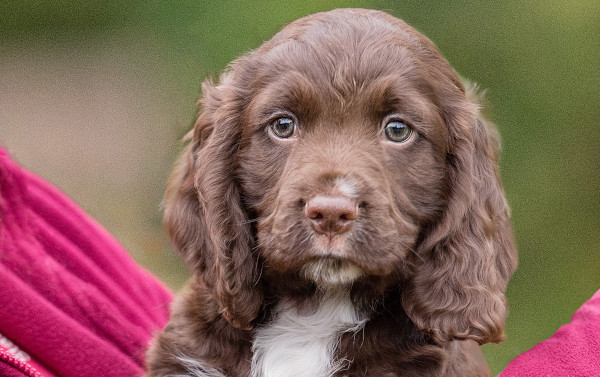 Cute Hearing Dogs Sponsor Pup Rico