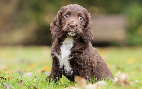 Adorable Hearing Dogs Sponsor Pup Rico