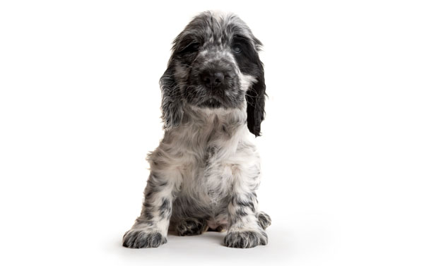 Adorable Hearing Dogs Sponsor Pup Tyson