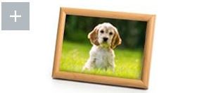 Puppy photo in frame