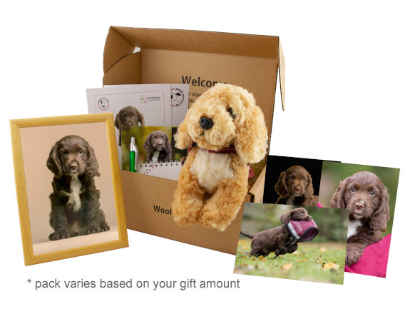 hearing-dogs-puppy-sponsorship-pack-575w.jpg